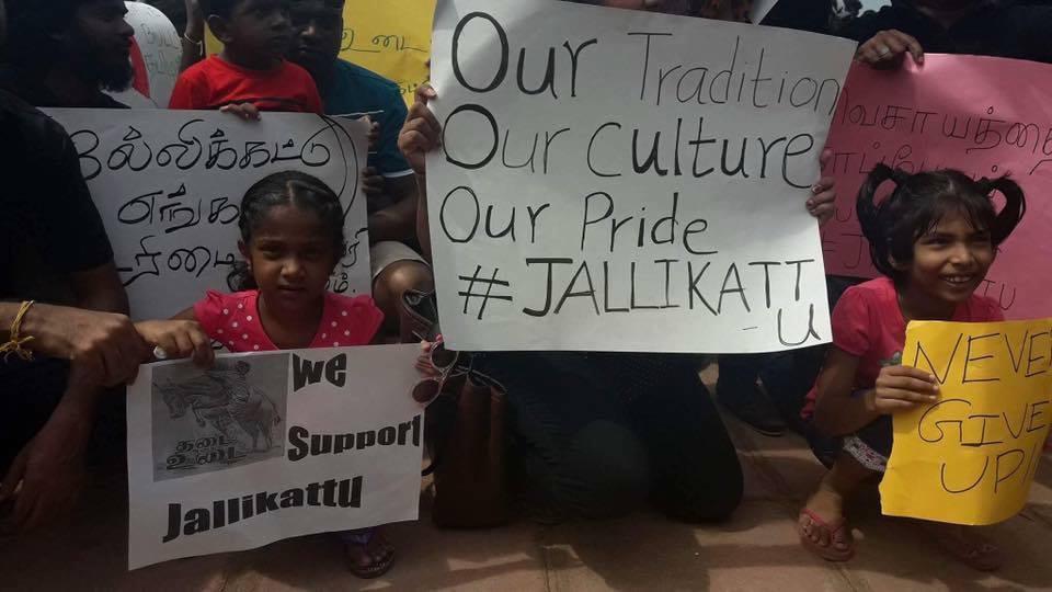 Jalliakattu protest in Lanka
