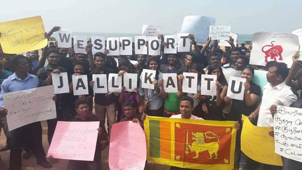 Jallikattu protest in Lanka