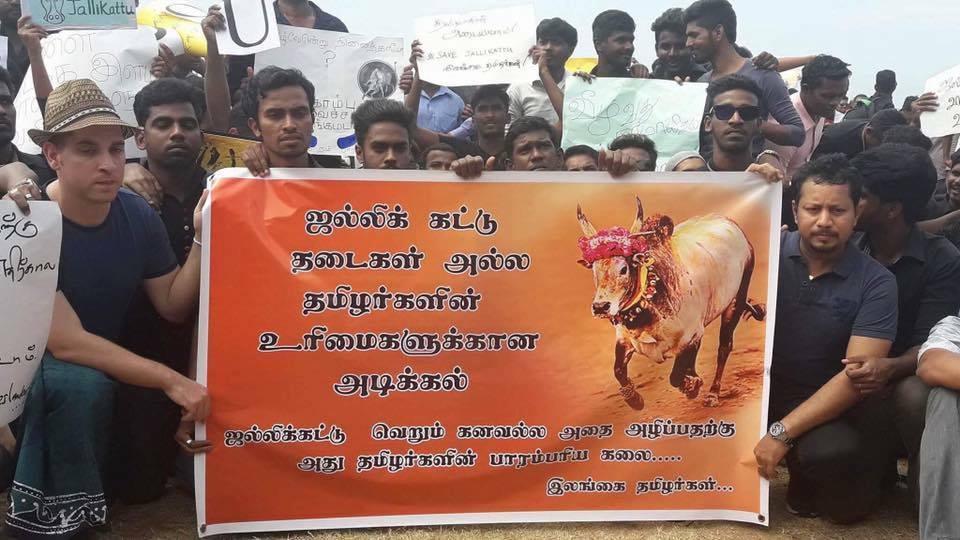 Jallaikattu protest in Lanka