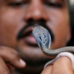 பாம்பு விஷத்தில் போதை ஏற்றிய இளைஞர்... அதிர்ந்த டாக்டர்கள்