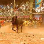 ஜல்லிக்கட்டு: கை விரித்தது மத்திய அரசு