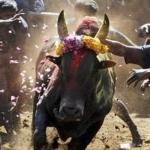 #Jallikattu- கடலில் இறங்கி மீனவர்கள் போராட்டம்!