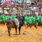 அவனியாபுரத்தில் பிப்ரவரி 5-ம் தேதி ஜல்லிக்கட்டு!