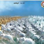 ஜல்லிக்கட்டு போராட்டம் - சினிமா gif-களின் வழி ஒரு மீளாய்வு!