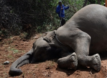 Elephant shot dead by farmers in Krishnagiri