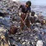 எண்ணூர் விபத்து: மீன்கள்...மீனவர்கள்...மீட்புப்பணியாளர்களுக்கு என்னவெல்லாம் பாதிப்புகள்? #ChennaiOilSpill