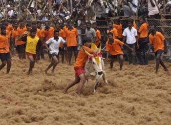 32 வயதில் 650 பரிசுகள்.. 90 தையல்கள்.. ஜல்லிக்கட்டின் கில்லி மதுரை மணி! #VikatanExclusive