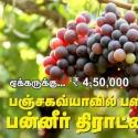 ஏக்கருக்கு ரூ.4,50,000 வருமானம்... பஞ்சகவ்யாவில் பளீரிடும் பன்னீர் திராட்சை!