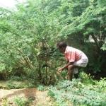 ஜாமீனில் வருபவர்கள் 100 சீமைக் கருவேல மரங்களை அகற்ற வேண்டுமாம்!