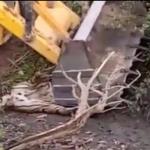 புல்டோசர் ஏற்றி புலியைக் கொன்ற வனத்துறையினர்... எங்கே போனது #SaveTiger திட்டம்?