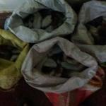 ராமேஸ்வரத்தில் 100 கிலோ கடல் அட்டைகள் பறிமுதல்: ஒருவர் கைது