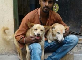 சென்னை கத்திக்குத்தில் விரைந்து செயல்பட்ட ரியல் ஹீரோயின்கள்... பப்பி, பெப்சி!  #VikatanExclusive