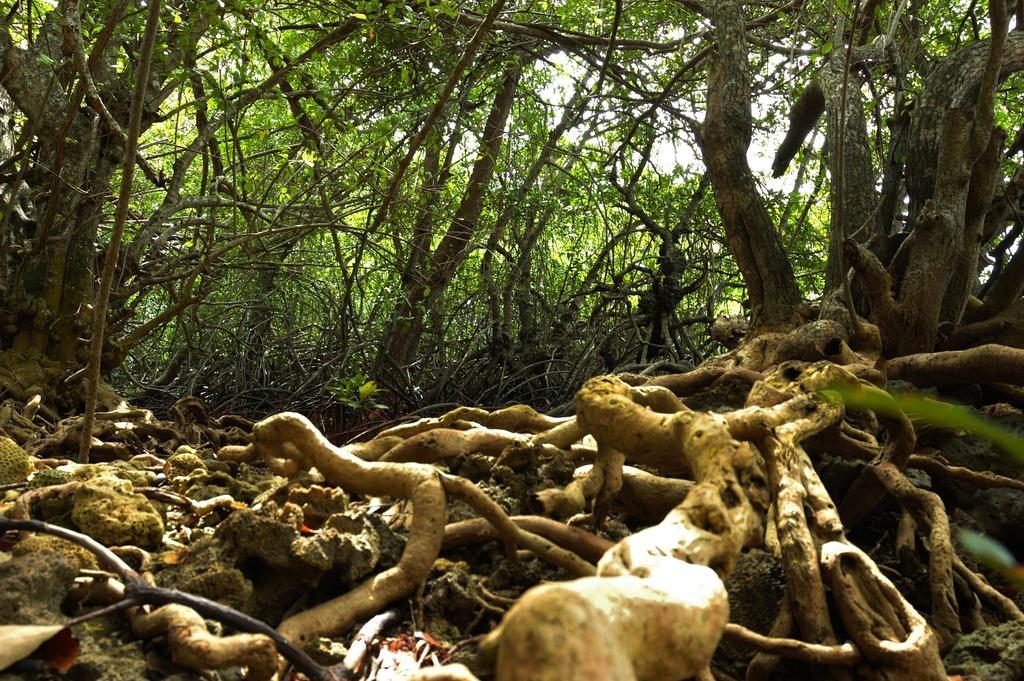 வியட்நாம் சதுப்பு நிலக்காடுகள்