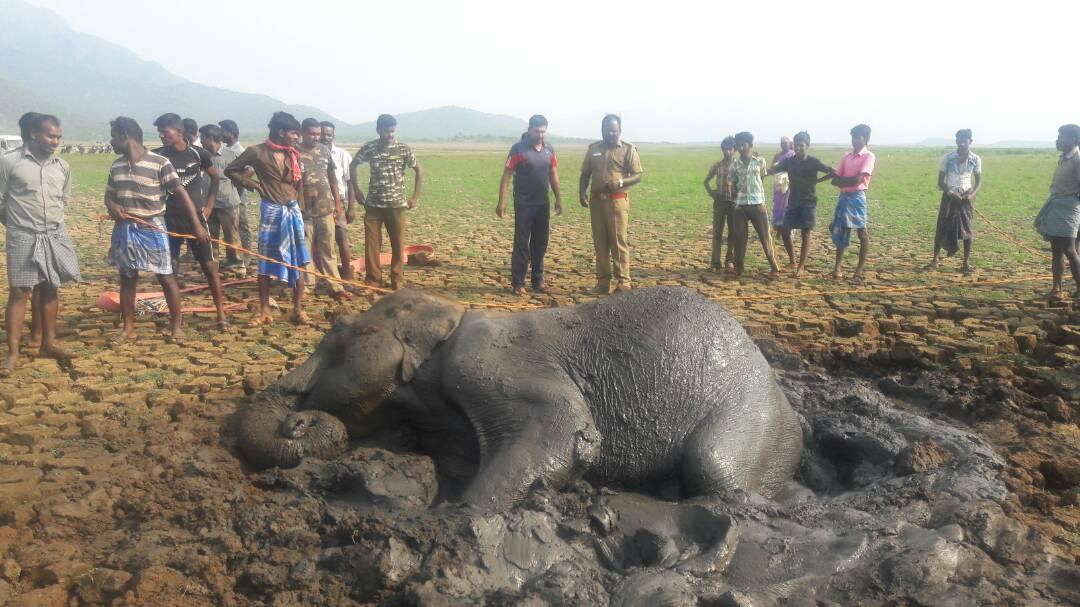 Elephant Rescued