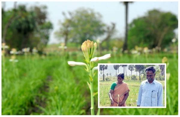 Tuberose Cultivation