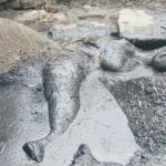 தண்ணீருக்காகத் தவித்த யானை சேற்றில் சிக்கி பரிதாபமாக உயிரிழந்த சோகம்