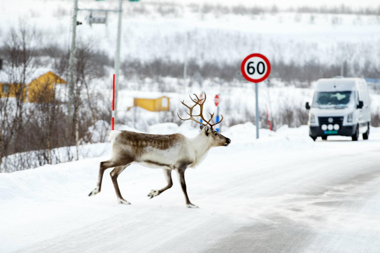 Norway deer killing