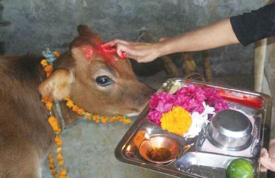 கோமாதா பூஜை