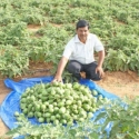 2.8 Lakhs income in just 8 months... Organically blooming brinjals..!