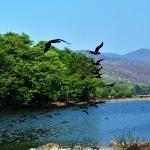 காவிரி கடந்த பாதை இப்போது எப்படி இருக்கிறது? ஓர் அதிர்ச்சிப் பயணம் (வீடியோ தொடர்) #Cauvery #Hogenakkal