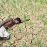 இந்தியாவில் ஆண்டுக்கு 12,000 விவசாயிகள் தற்கொலை - மத்திய அரசு