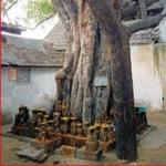 ராகு கேது தோஷம், புத்திரபாக்கியத் தடையை நீக்கும் நாக வழிபாடு!