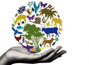 உடையும் உயிர்ச்சங்கிலி... இணைக்க என்ன வழி? #BiodiversityDay