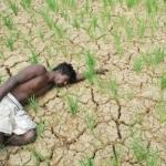 டெல்டா மாவட்டங்களில் சென்ற ஆண்டைவிட 90% நெல் உற்பத்தி குறைவு... யார் காரணம்? #MustRead