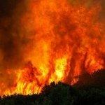 போர்ச்சுகலில் பயங்கரக் காட்டுத் தீ : 62 பேர் பலி