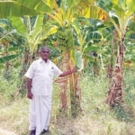 4 lakhs from 8 acres of banana farming...Zero budget farmer's grandeur!