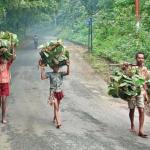 10 நாள்களில் 15 பேர் பரிதாப சாவு.. பழங்குடி கிராமத்தில் நடந்த சோகம்!