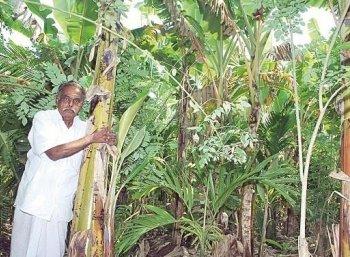 Coca, Areca, Banana, Long pepper and Blackpepper... Standing in between coconut!
