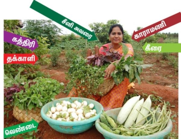 woman farmer Sweetlin get success in mixed-crop cultivation