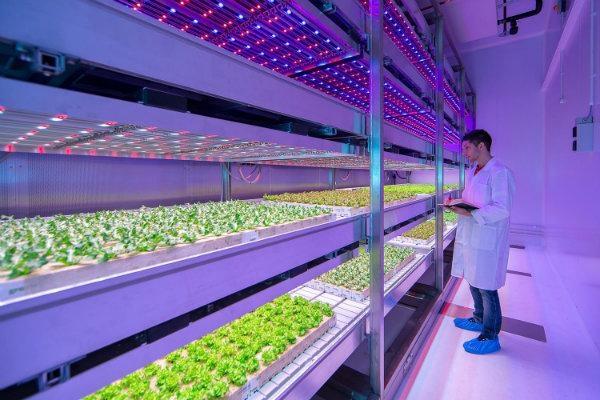 இனி எதிர்கால விவசாயம் - Vertical Farming