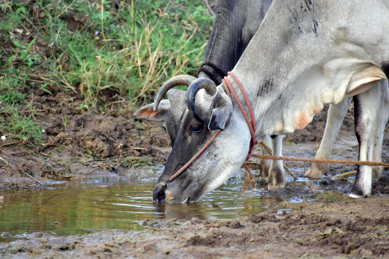 மாசடைந்த நிலத்தடி நீர்