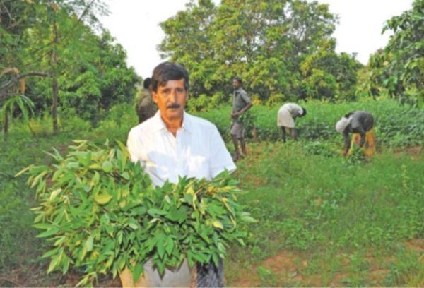 farmer Nagarathina Naidu