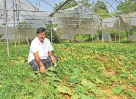 Nagarathina naidu in his farm