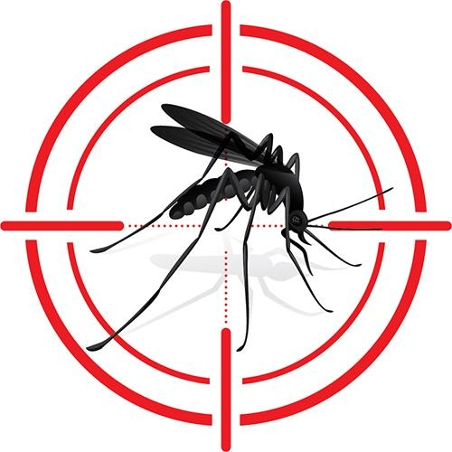 Dengue - Mosquitoes