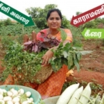 Expert woman farmer in mixed-crop cultivation... Rs.15,000/- profit per week per acre!