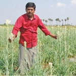 Rich returns from Champanki... Monthly Rs.53000 profit from 1.25 acre!