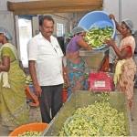 20 Trees...₹ 1 Lac Profit... Unbelievable returns from mango pickles!