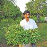 17 Lakhs from from 12 acres... An award winning farmer Nagaratnam Naidu! - (Part 3)
