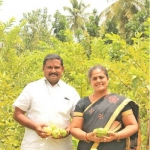 1 Acre... 3 lakhs from Guava... Giving aplenty!
