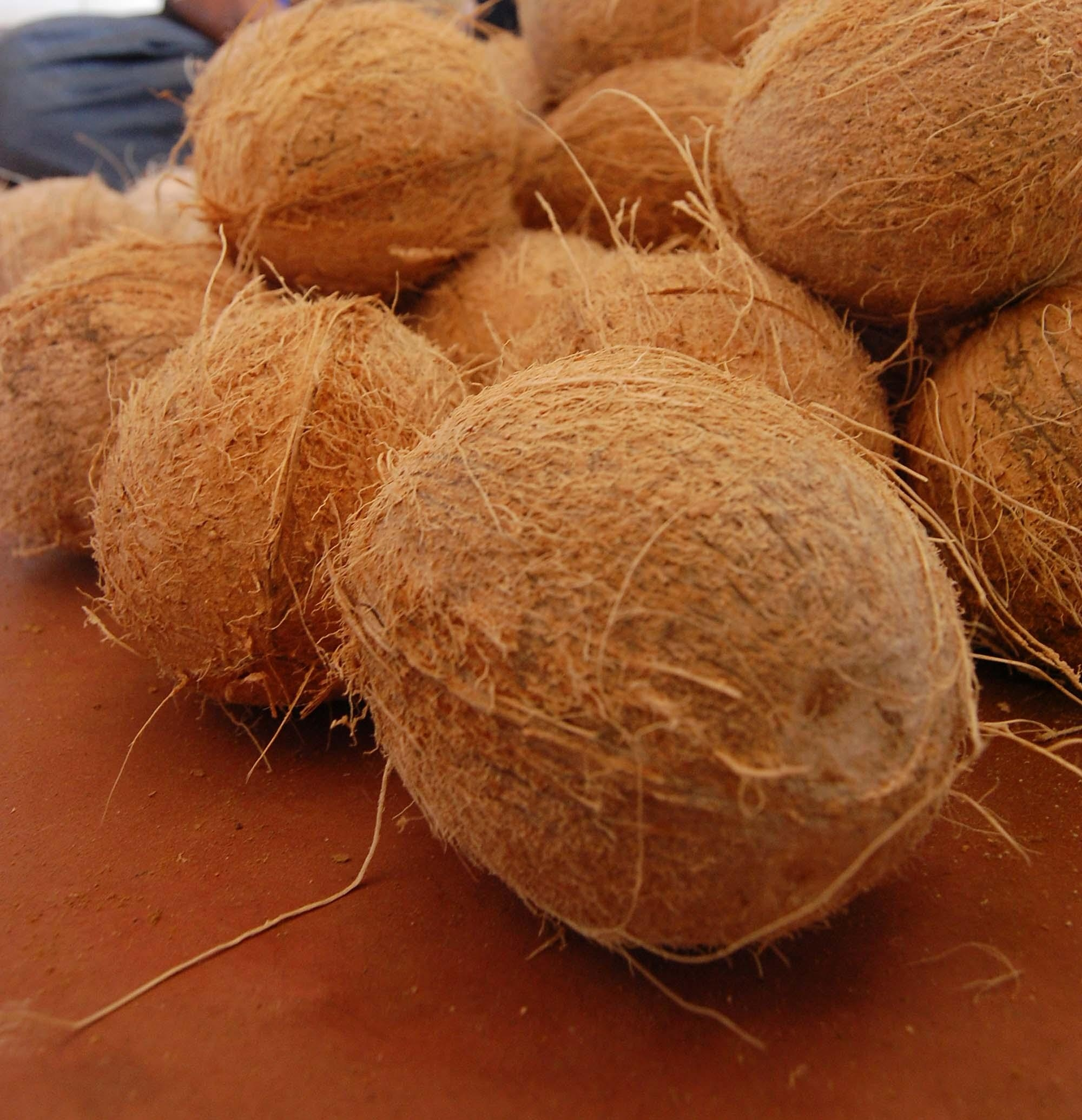 coconut price