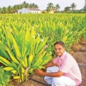 ₹ 1,50,000 from an acre in 8 months...Fragrant profit from turmeric!