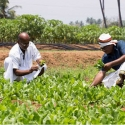 Simple Spinach... Super Profits - ₹ 75,000 per month in one acre..!
