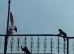 சுதந்திர தின விழா : தாமதித்த பள்ளி நிர்வாகம்; கொடியேற்றிய குரங்குகள்!