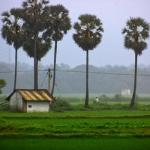இந்த இளைஞரின் வாட்ஸ்அப் க்ரூப்பில் ஃபார்வர்டு ஆனவை  37 ஆயிரம் பனை விதைகள்தான்..!