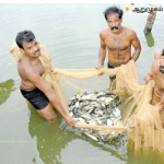 Awesome income of ₹ 3,50,00 per year from composite fish farming..!