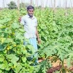 ₹3,40,000  Profit per acre... Ever-promising Papaya ..! #OrganicFarming